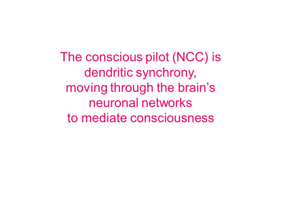 The conscious pilot (NCC) is dendritic synchrony,