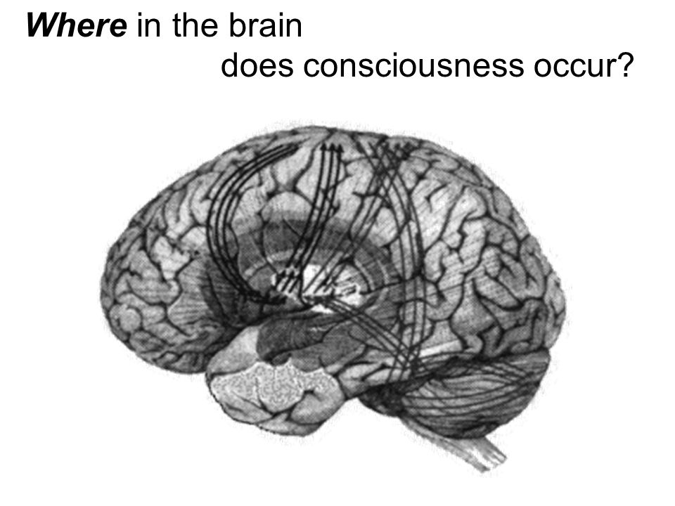 Where in the brain does consciousness occur