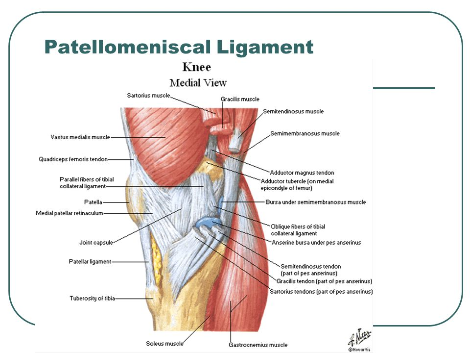 The Knee Tibio Femoral Ppt Video Online Download