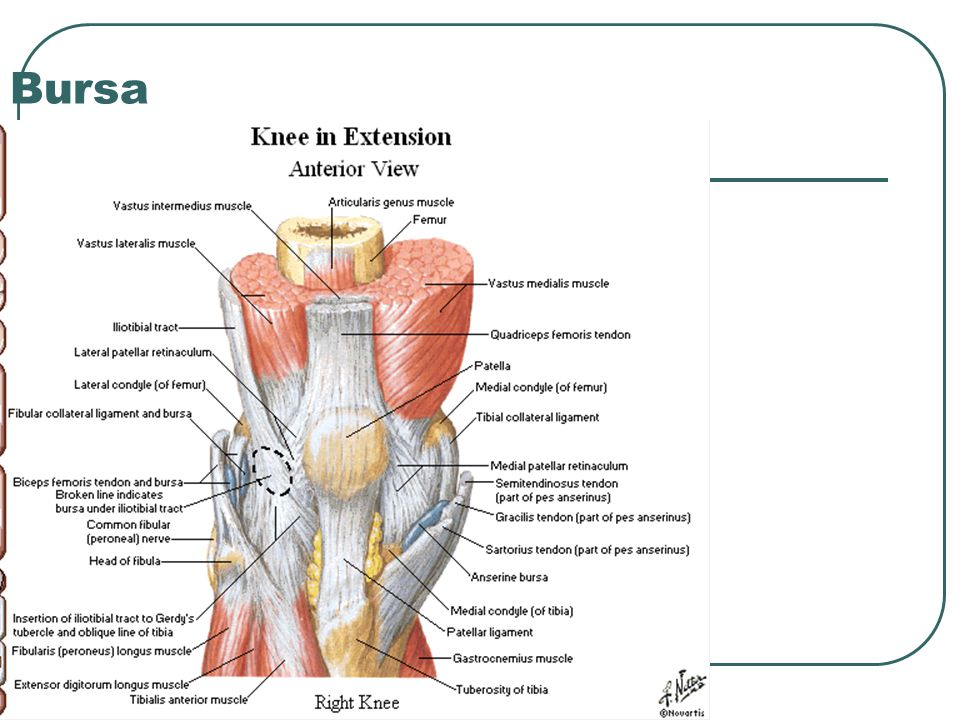 The Knee Tibio-Femoral. - ppt video online download