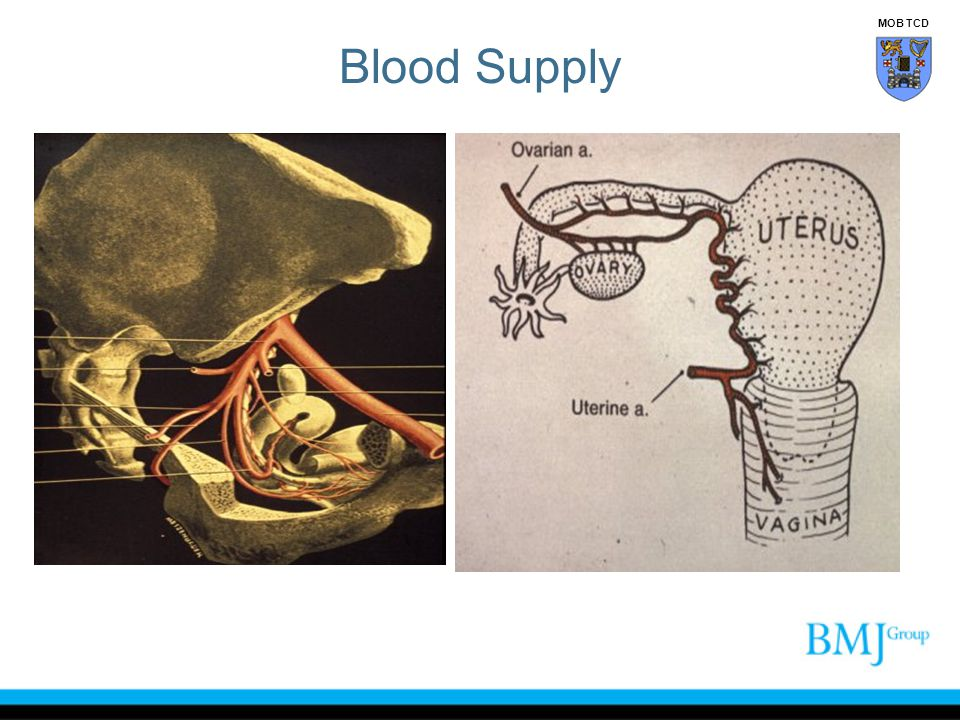 Blood Supply MOB TCD
