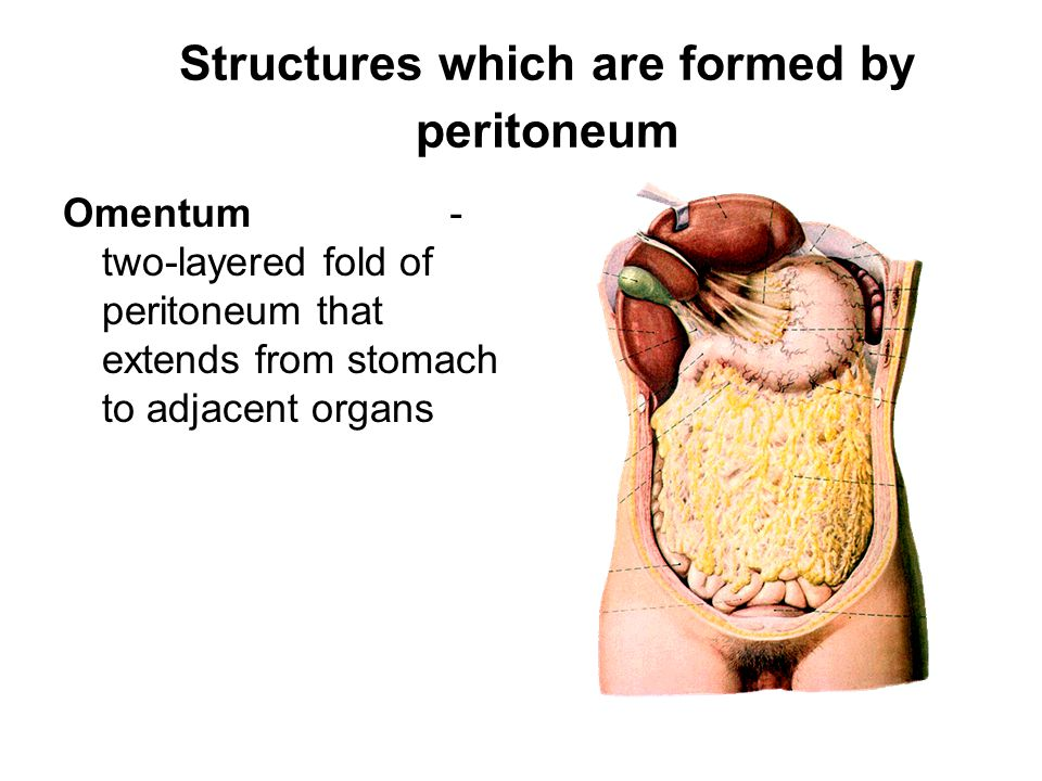 Structures which are formed by peritoneum