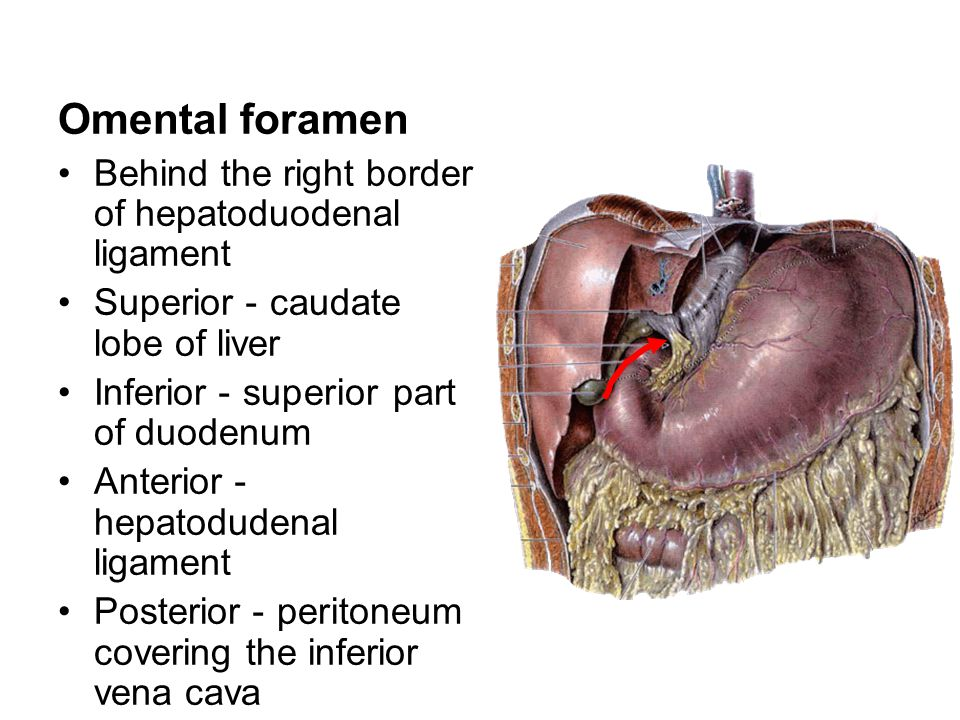 Omental foramen Behind the right border of hepatoduodenal ligament