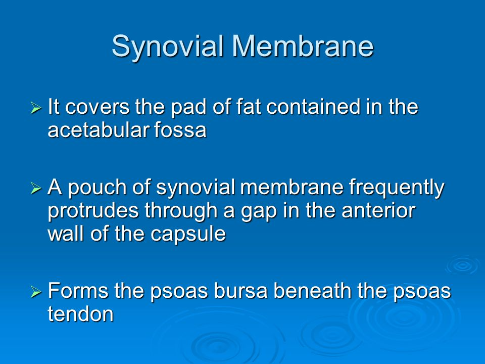 Synovial Membrane It covers the pad of fat contained in the acetabular fossa.