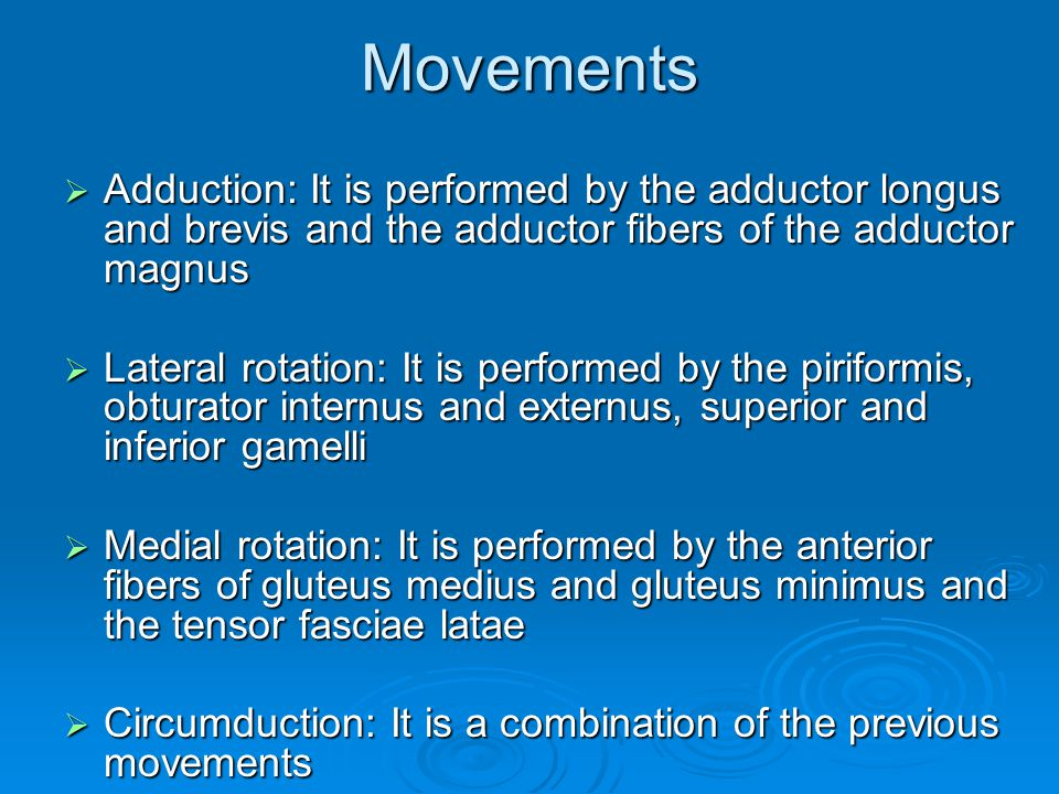 Movements Adduction: It is performed by the adductor longus and brevis and the adductor fibers of the adductor magnus.