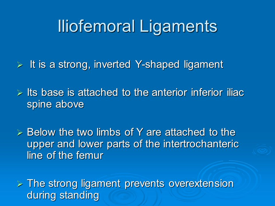 Iliofemoral Ligaments