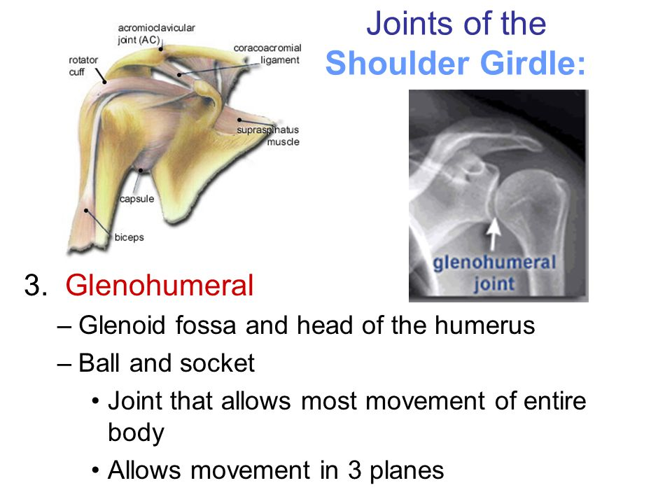 Joints of the Shoulder Girdle: