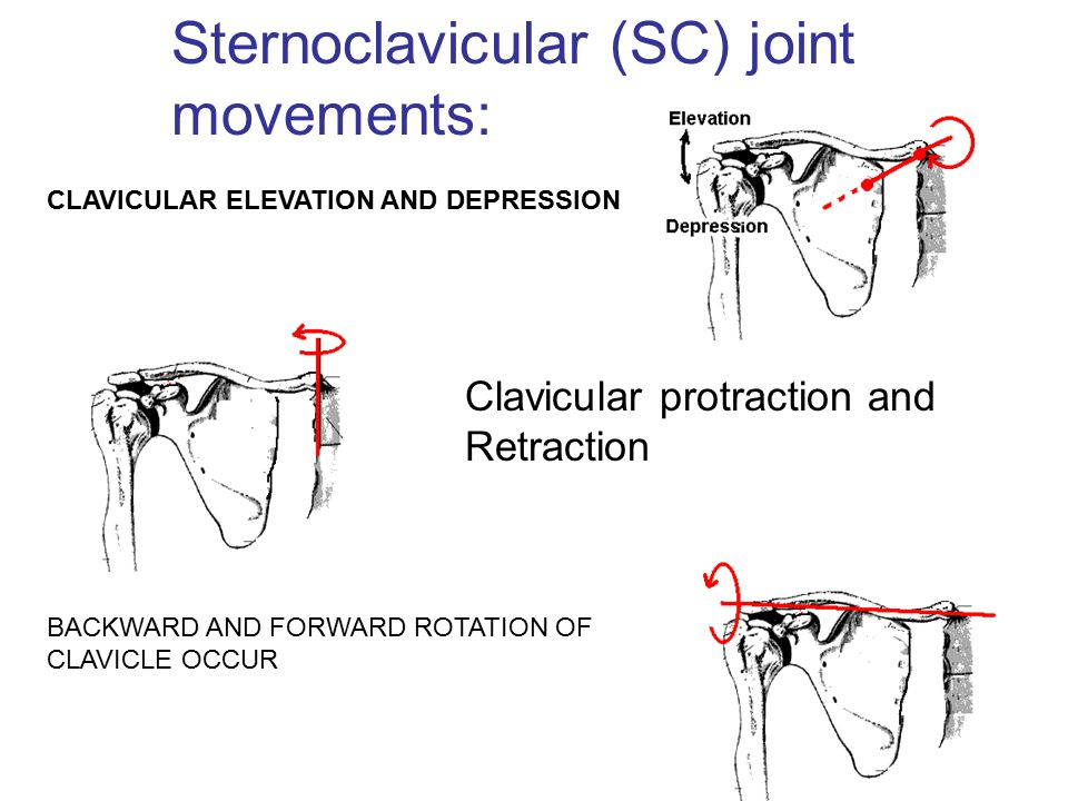 Sternoclavicular (SC) joint movements: