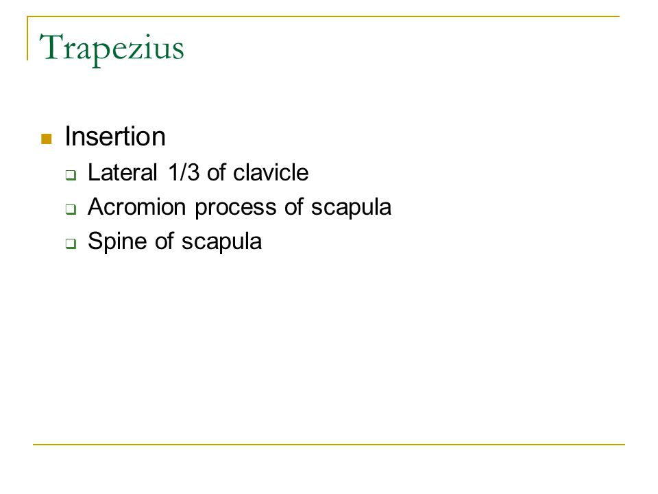 Trapezius Insertion Lateral 1/3 of clavicle
