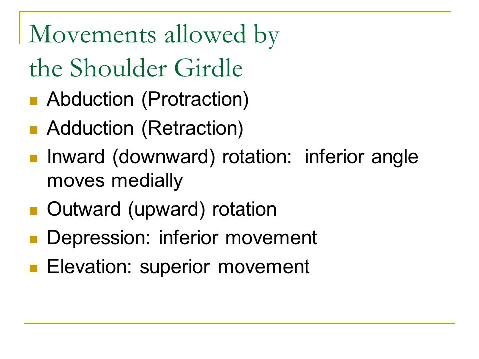 Movements allowed by the Shoulder Girdle