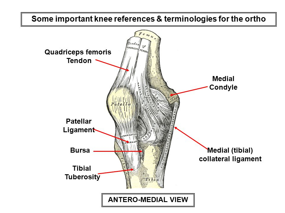Some important knee references & terminologies for the ortho