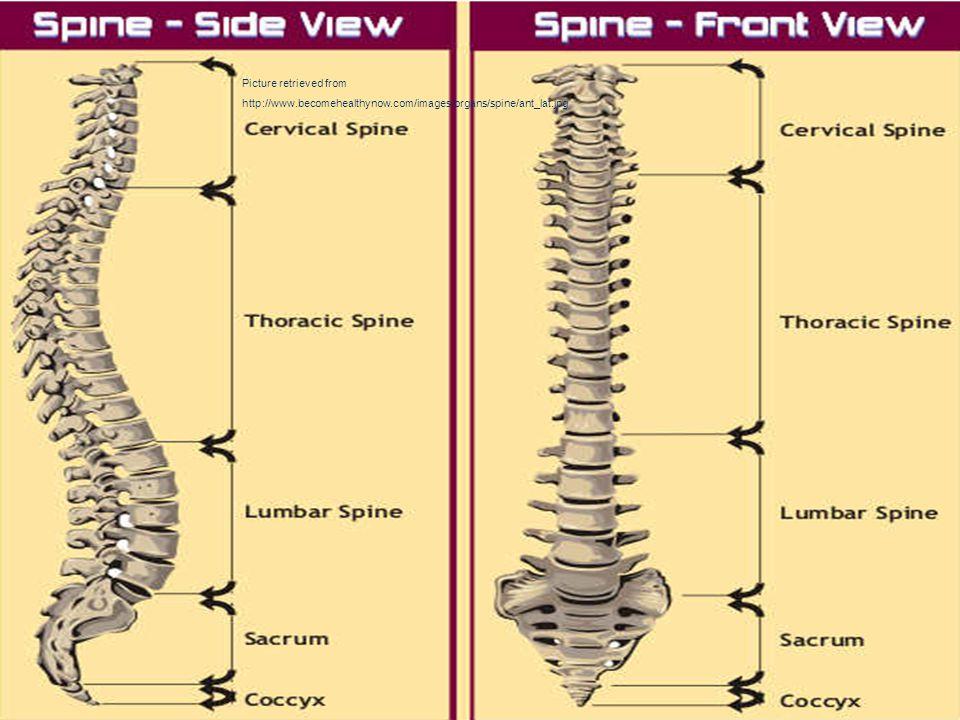 Biomechanics Of Human Spine Ppt Video Online Download