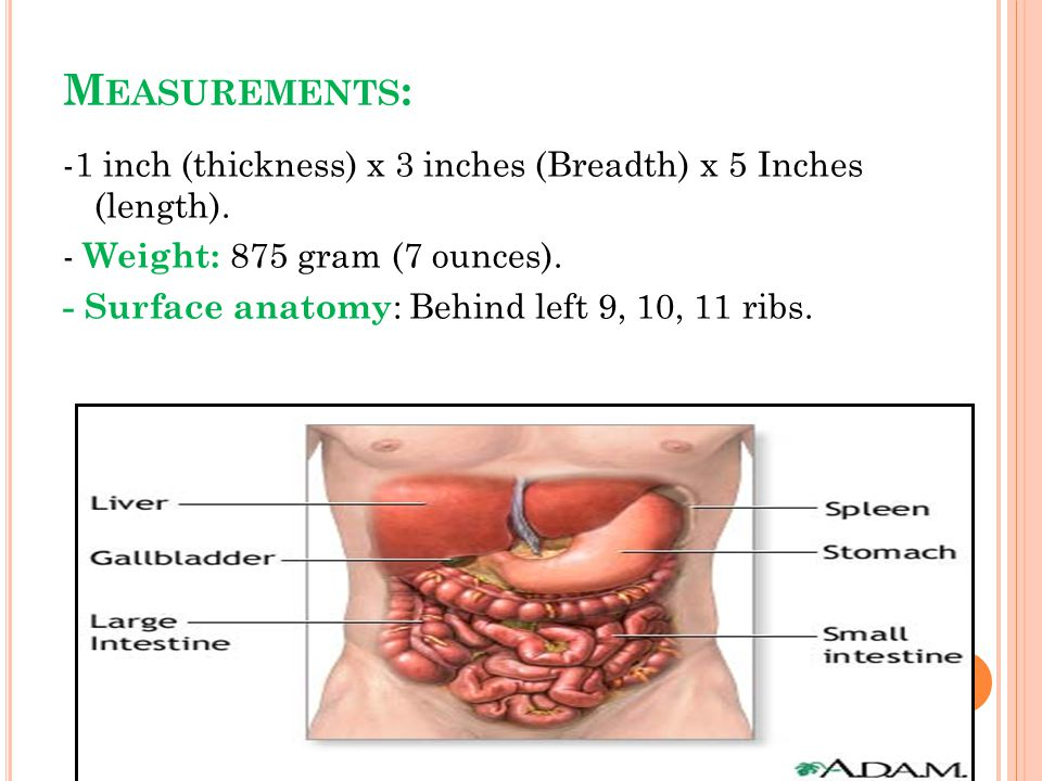 Beautiful Surface Anatomy Of Spleen Composition - Anatomy And ...