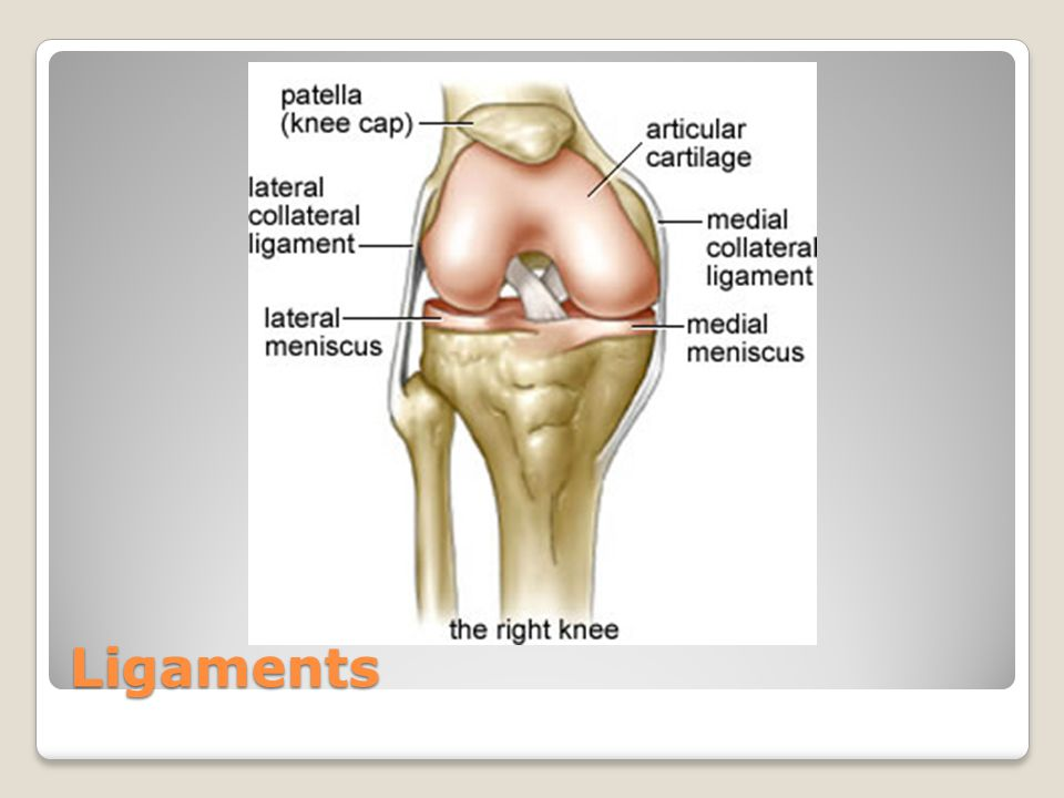 Anatomy and Injuries of the Knee - ppt video online download