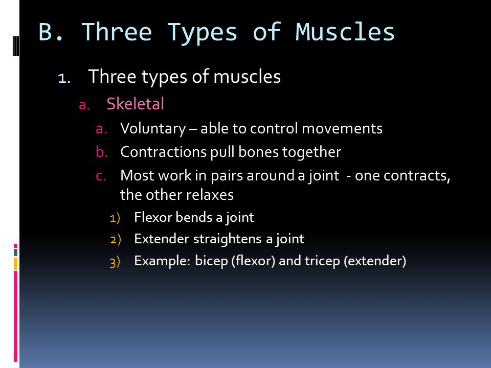 B. Three Types of Muscles