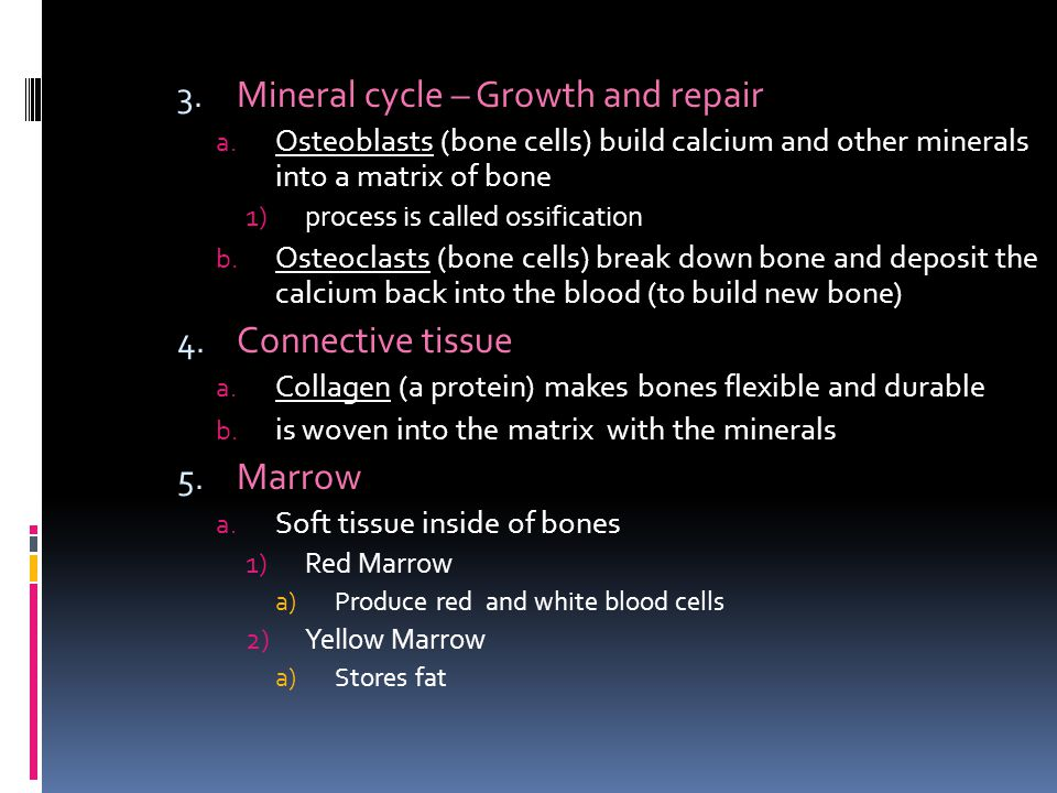 Mineral cycle – Growth and repair