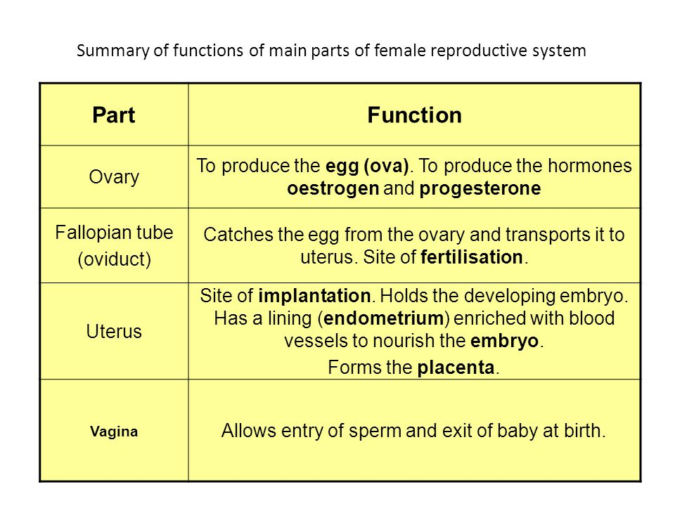 Human Sexual Reproduction Ppt Video Online Download