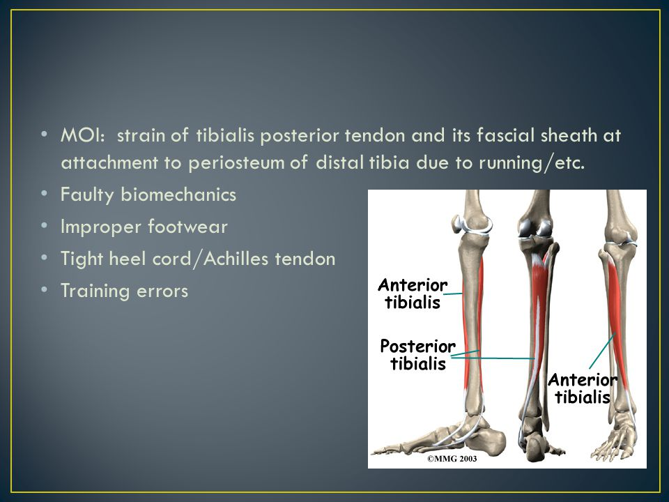 Injuries To The Foot Ankle And Lower Leg Ppt Video Online Download