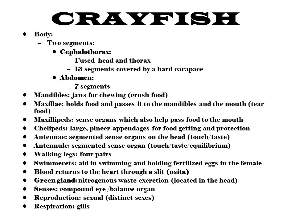 Crayfish Ppt Video Online Download