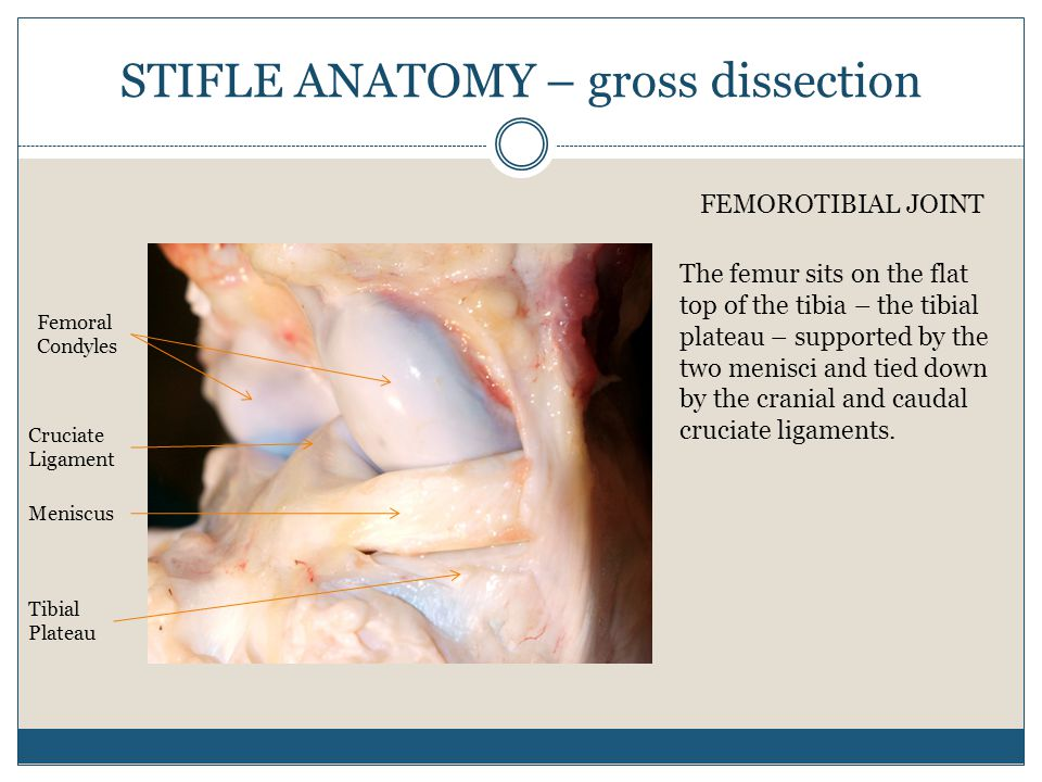 How Do We Diagnose Lameness In Your Horse Ppt Video Online Download