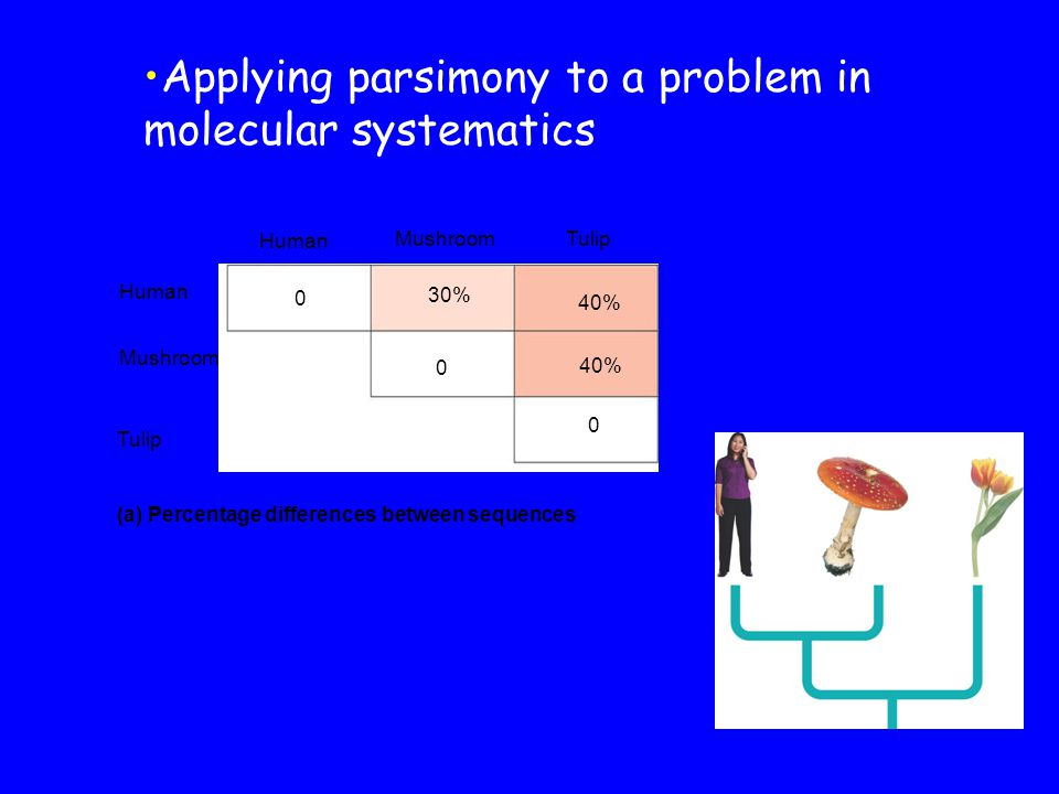 Applying parsimony to a problem in molecular systematics