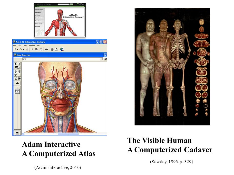 A Brief History of Human Anatomy - ppt download
