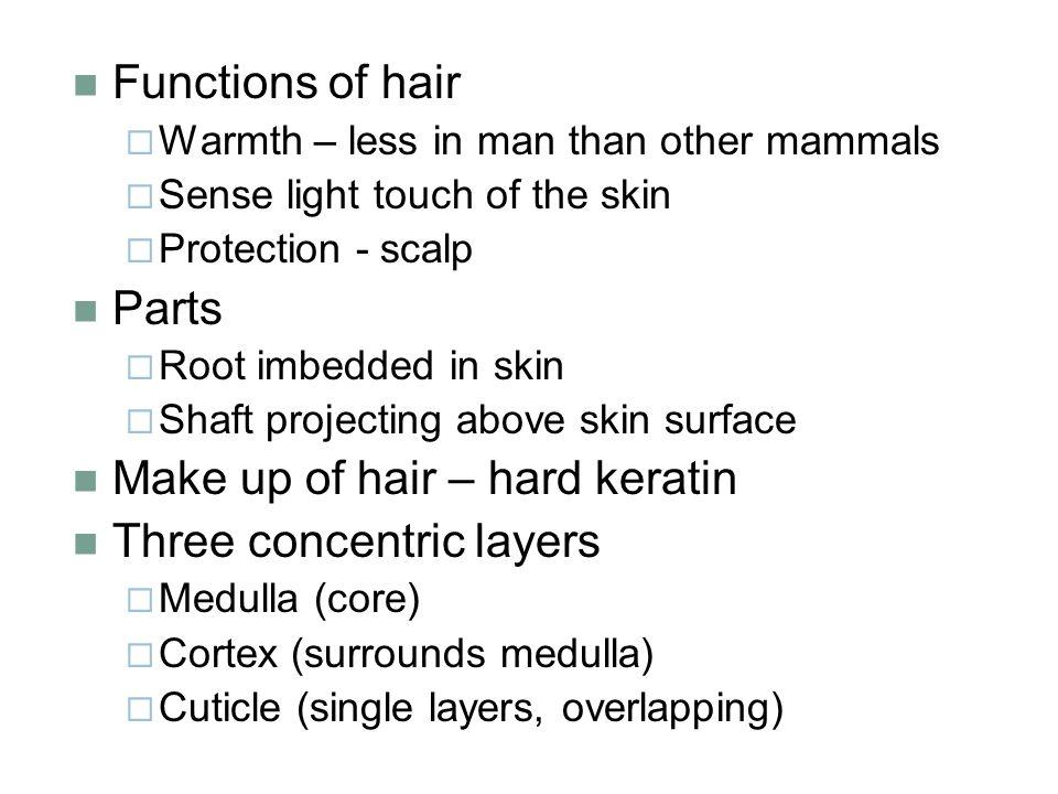 how to make hair hard