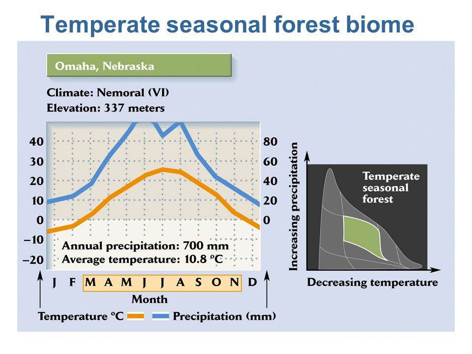 Terrestrial Biomes Of The World Lecture Topics Ppt Video Online