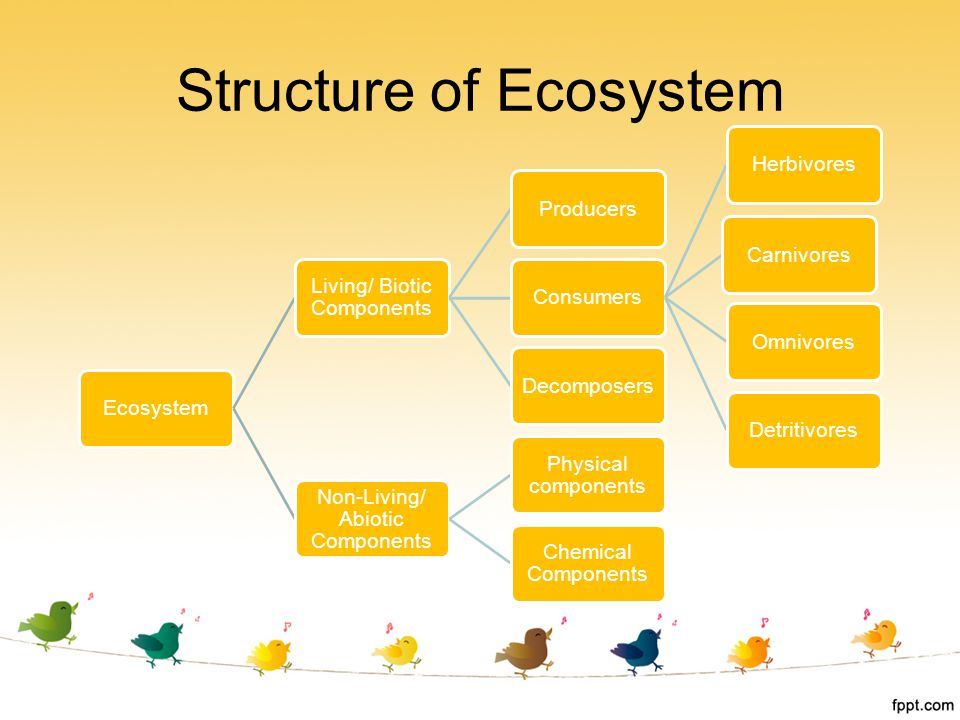 Structure of Ecosystem