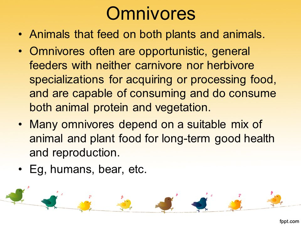 Omnivores Animals that feed on both plants and animals.