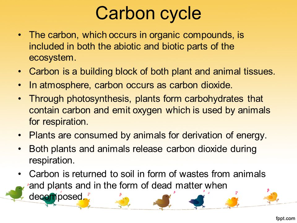 Carbon cycle The carbon, which occurs in organic compounds, is included in both the abiotic and biotic parts of the ecosystem.