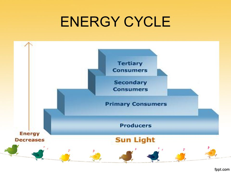 ENERGY CYCLE