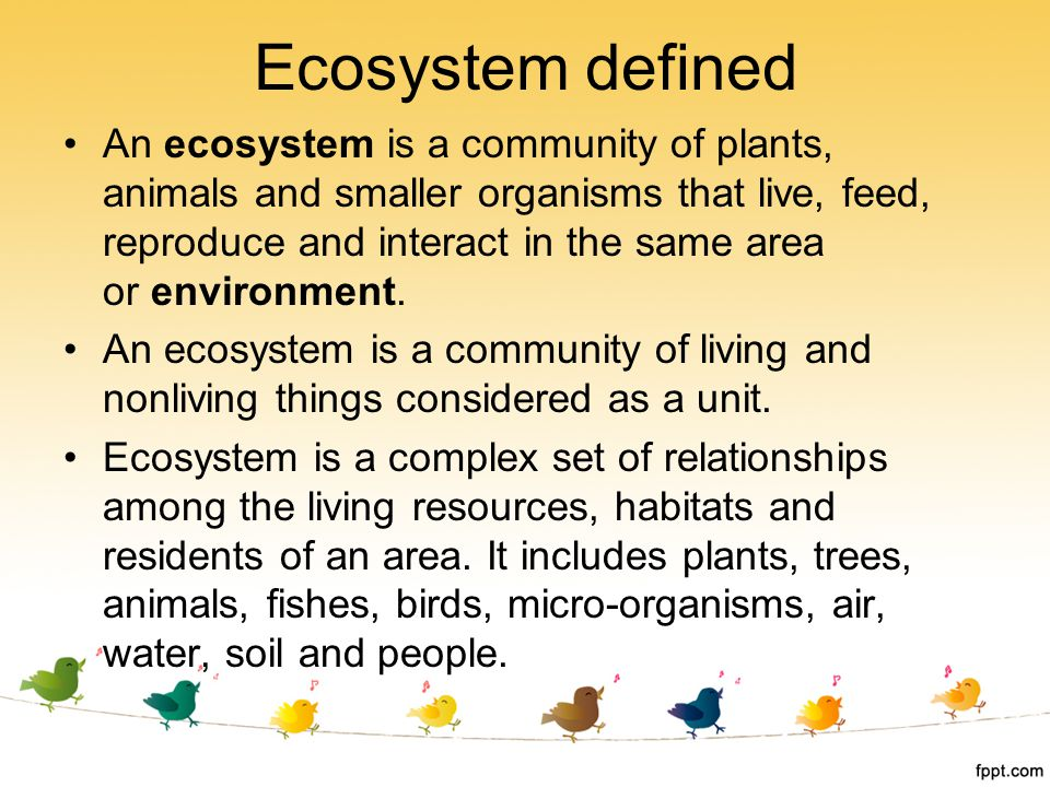 Ecosystem defined