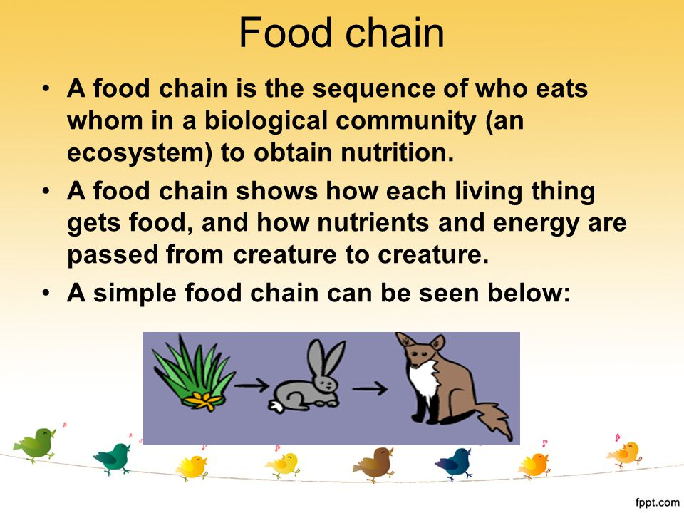 Food chain A food chain is the sequence of who eats whom in a biological community (an ecosystem) to obtain nutrition.