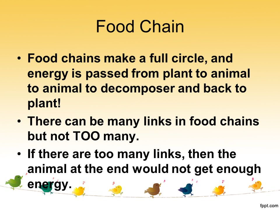 Food Chain Food chains make a full circle, and energy is passed from plant to animal to animal to decomposer and back to plant!