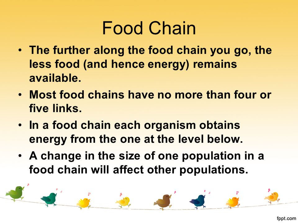 Food Chain The further along the food chain you go, the less food (and hence energy) remains available.