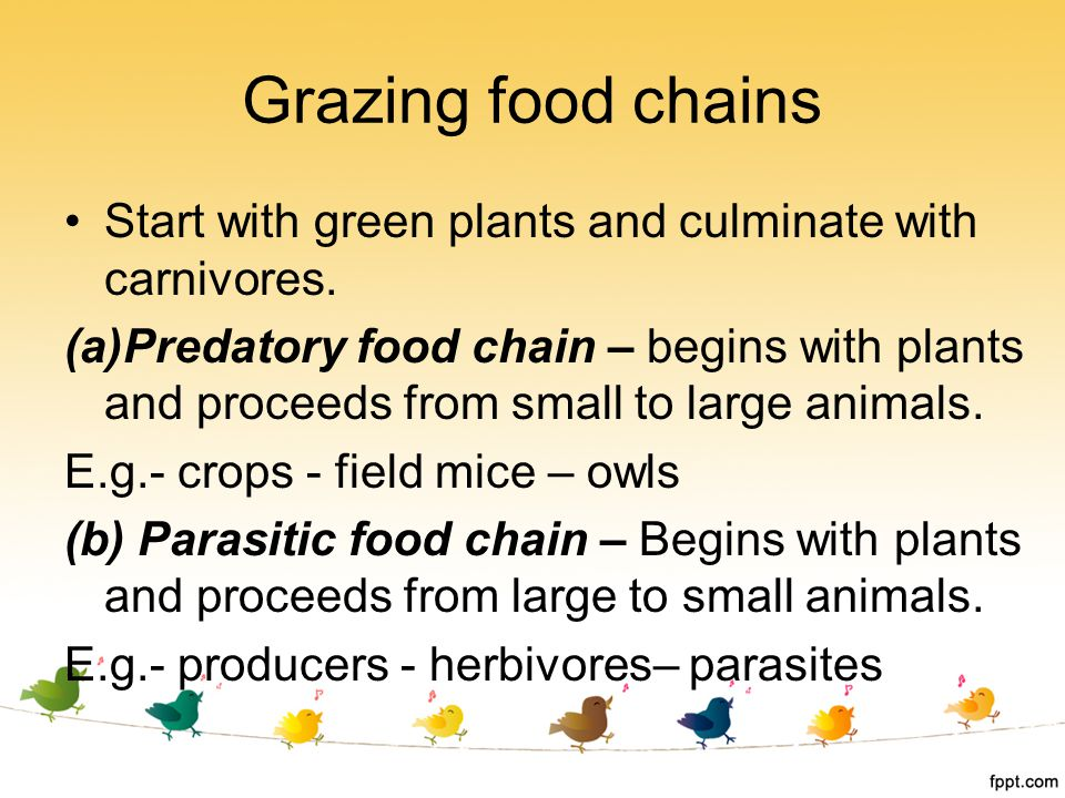 Grazing food chains Start with green plants and culminate with carnivores.