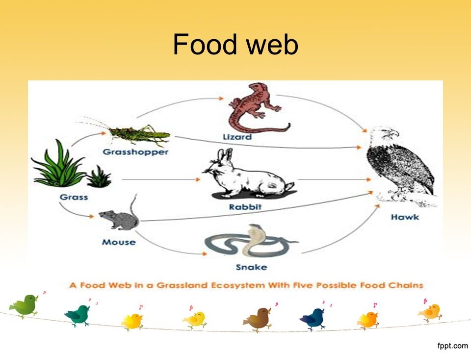ecosystem and food web Therefore, the food web depends on a constant supply of energy from producers and nutrients that are recycled by the decomposition of organisms as food is passed along the food chain, only about 10% of the energy is transferred to the.