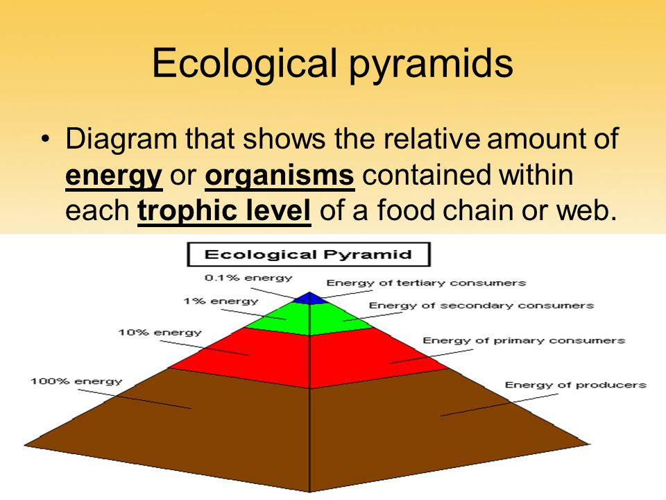Ecological pyramids Diagram that shows the relative amount of energy or organisms contained within each trophic level of a food chain or web.