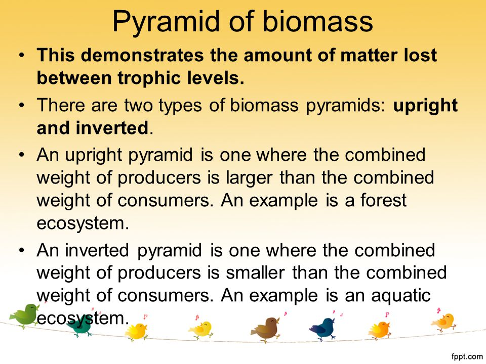 Pyramid of biomass This demonstrates the amount of matter lost between trophic levels.