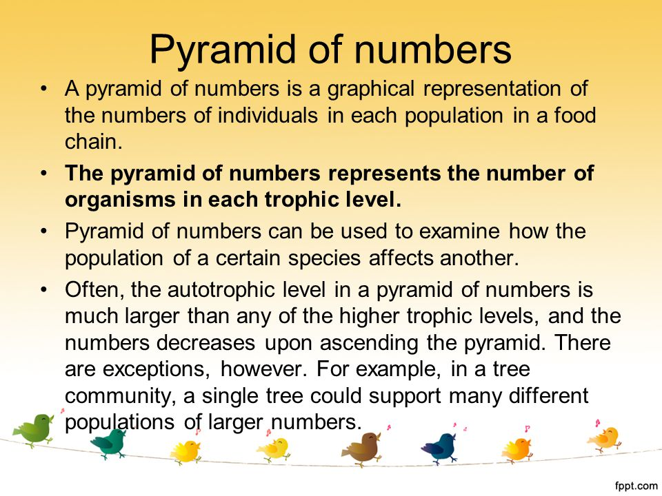 Pyramid of numbers A pyramid of numbers is a graphical representation of the numbers of individuals in each population in a food chain.