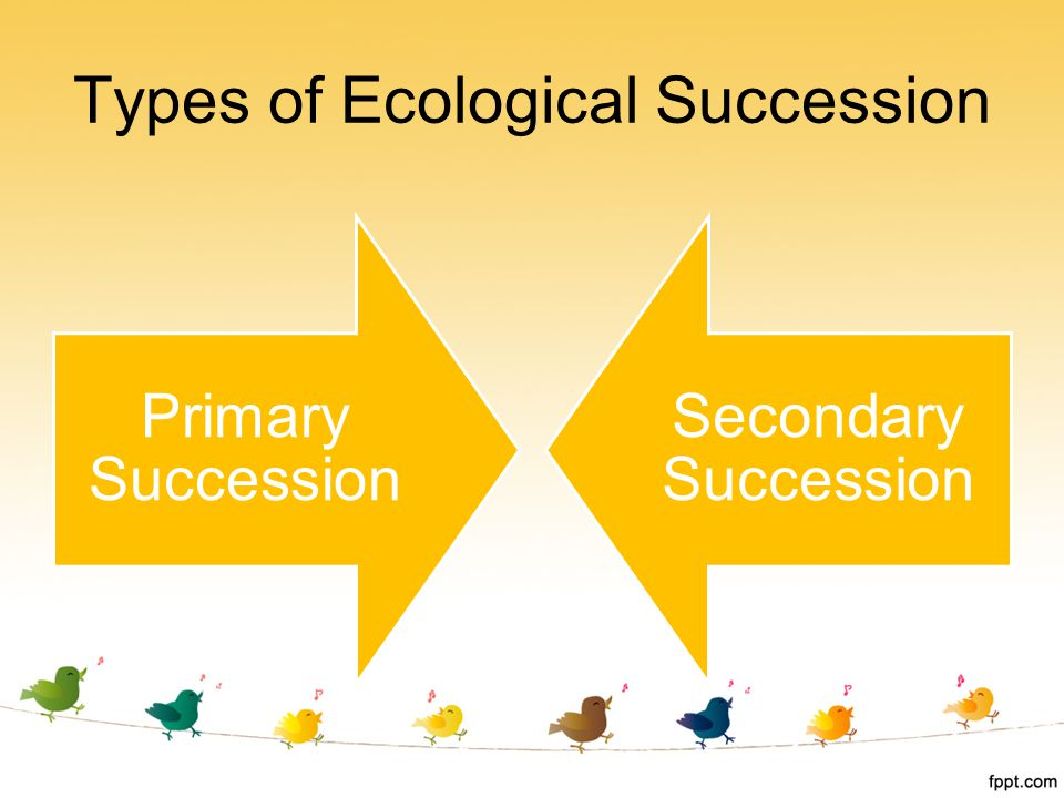 Types of Ecological Succession