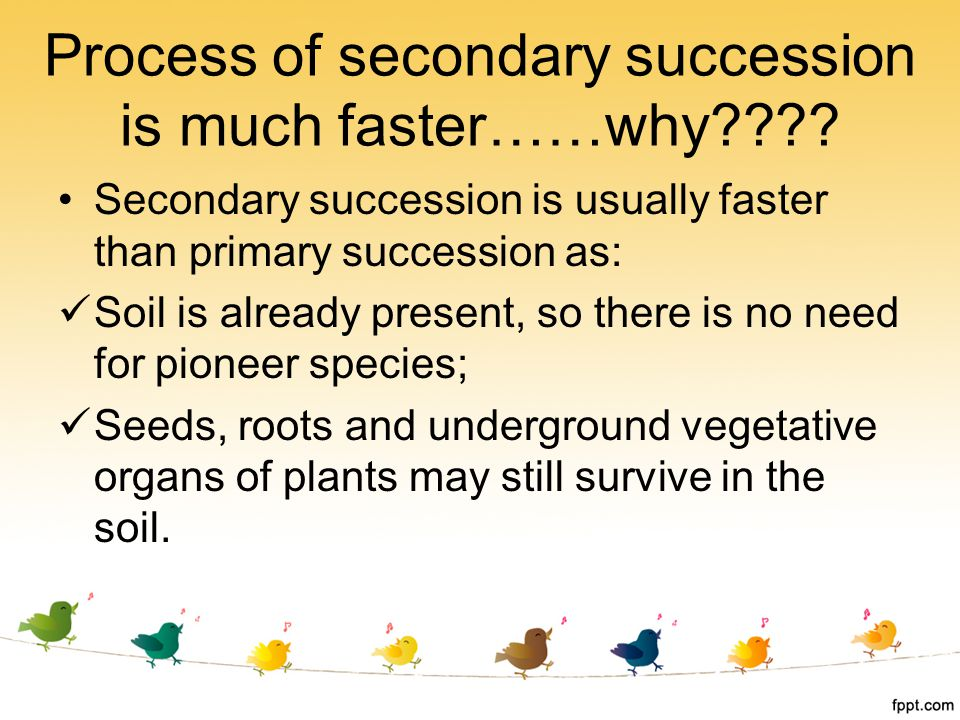 Process of secondary succession is much faster……why