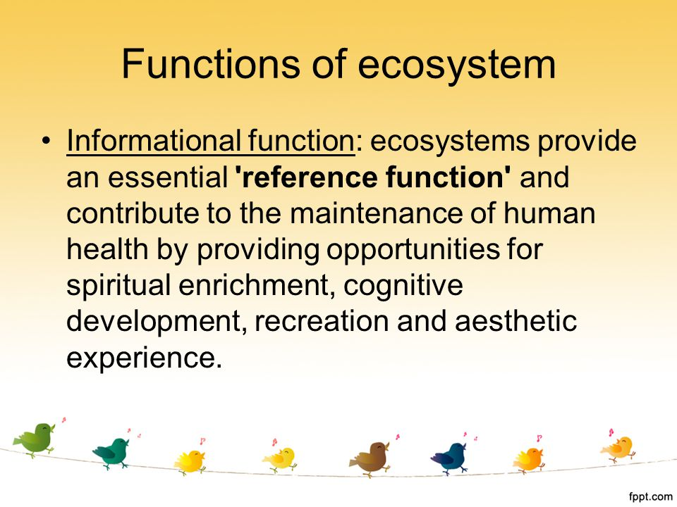 Functions of ecosystem