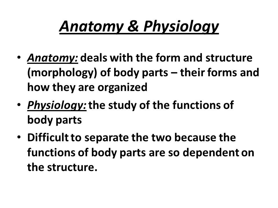 Introduction to Human Anatomy and Physiology Chapter 1 - ppt video ...