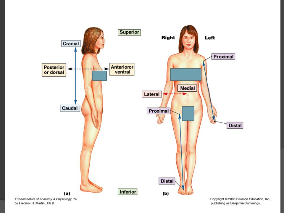 Introduction to Anatomy and Physiology - ppt video online download