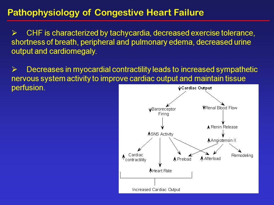Top Five Pathogenesis Of Congestive Heart Failure Ppt - Circus