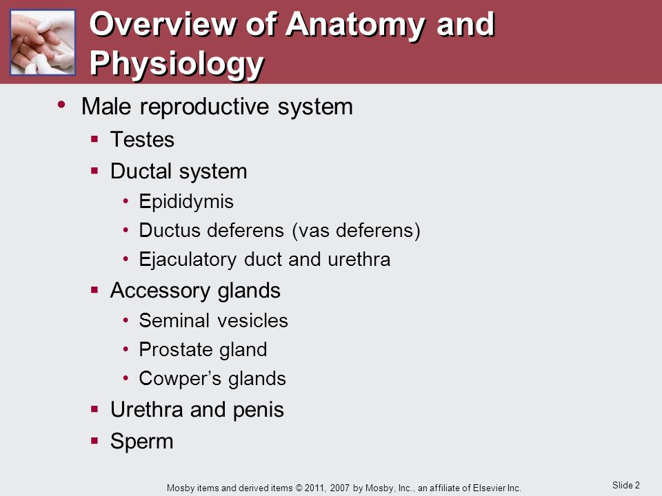 Chapter 12 Care of the Patient with a Reproductive Disorder - ppt ...