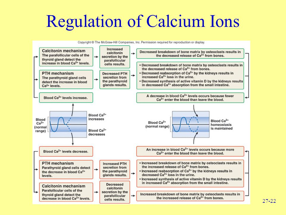Regulation of Calcium Ions