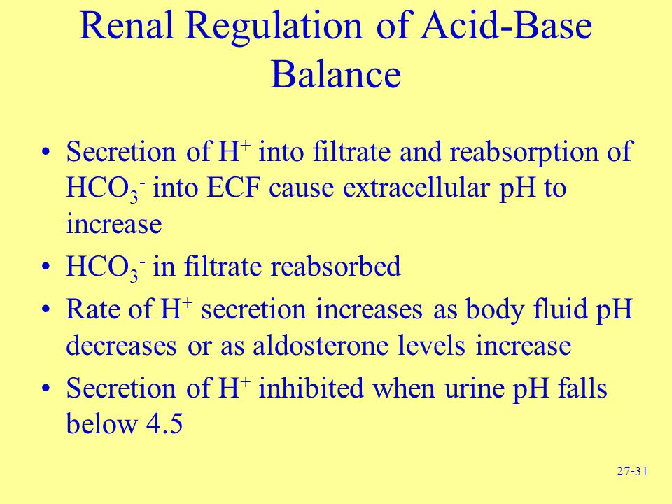 Renal Regulation of Acid-Base Balance